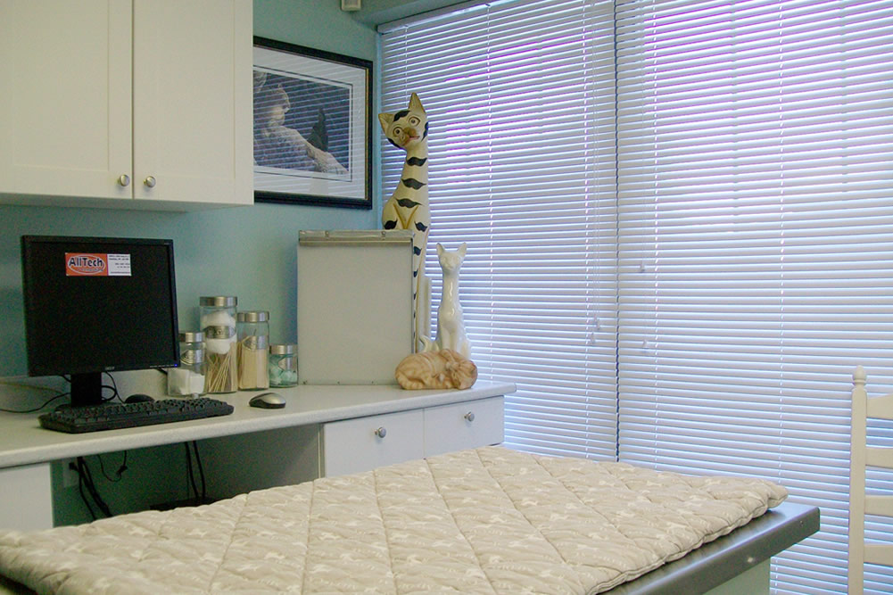 All exam rooms at Village Cat Clinic are clean and friendly for you and your cat.