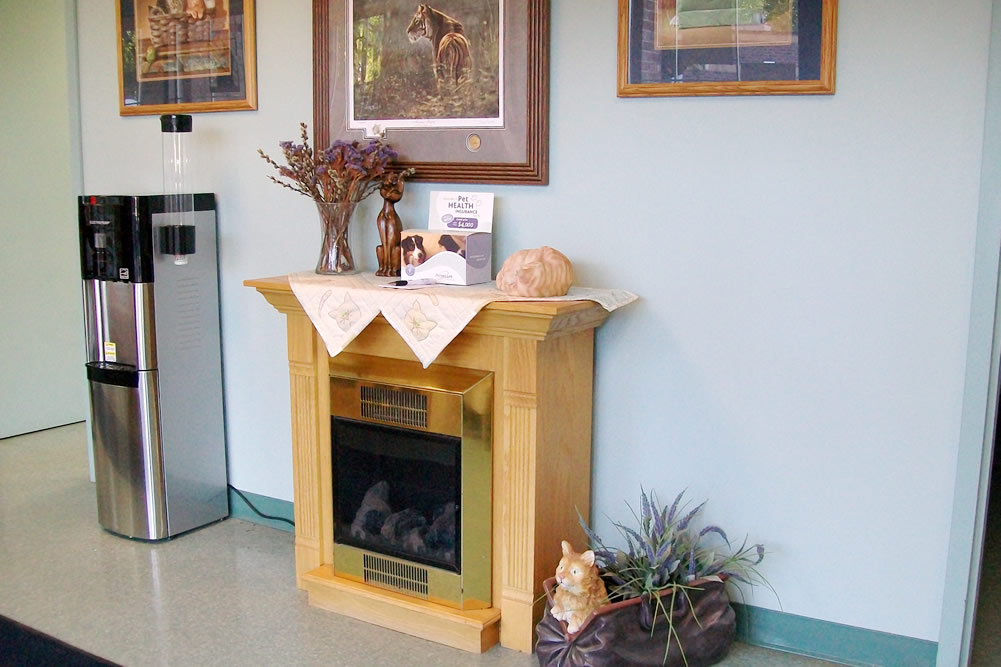 Village Cat Clinic's beautiful front room, with plenty of cat décor.