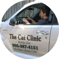 Village Cat Clinic mobile veterinary services PT Cruiser